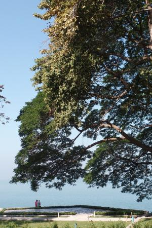 โรงแรมโคซี่ บีช: Дерево на территории отеля