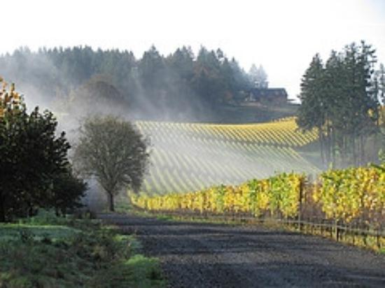 Winter's Hill Estate: Fall color