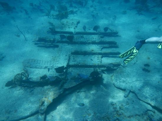 Mahoney wreck, Bahamas - Picture of Bahama Divers, Nassau