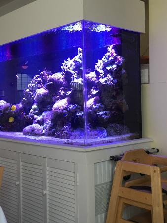 Yellowfin's : Fishtank in Restaurant