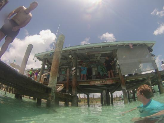 Compass Cay : Pic from the shark's point of view