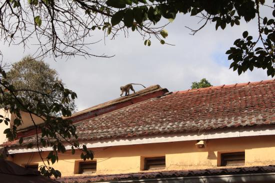 Villa 33: curious guests