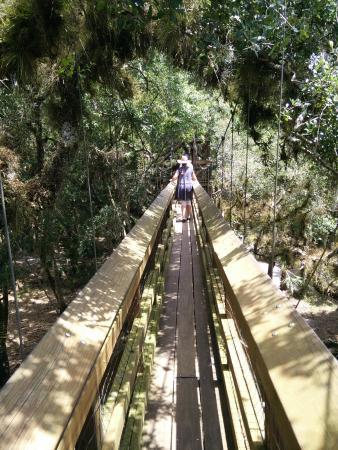 Myakka State Forest: Gångbron mellan tornen