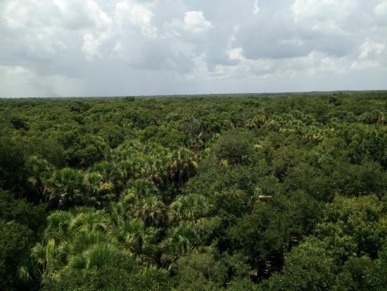 Myakka State Forest: Utsikt från utkikstornet