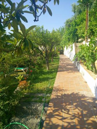 B&B Villa Vittoria: Giardino
