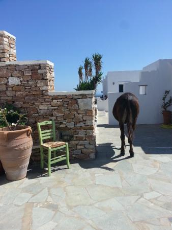 Windmill Bella Vista : espace hotel et son ane
