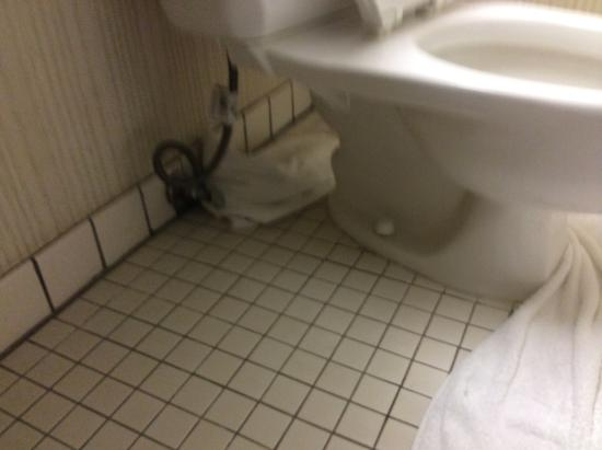 Quality Inn & Suites: Towel at rear of toilet. This was obviously placed there as flooding or leakage had happened bef