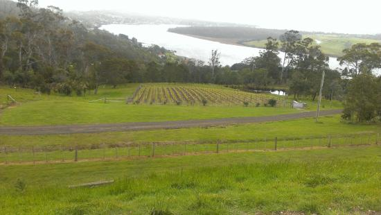 Ellie's Place: 20 minute drive to Tamar Valley wineries