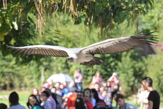 Zoo Santo Inácio : Birds of prey Demonstration