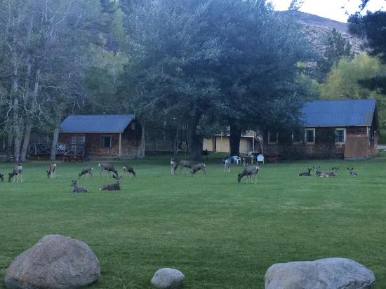 twin lakes resort updated 2018 campground reviews