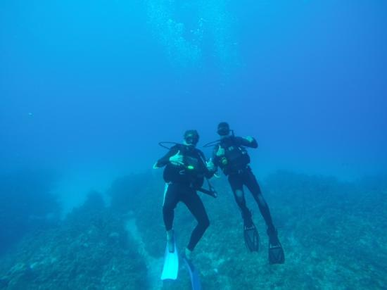 Cayman Diving: Good Dive