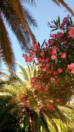 Villa More: Двор виллы утопает в растительности.