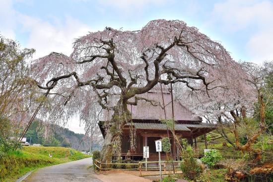 Saikoji - Or Seikoji Temple