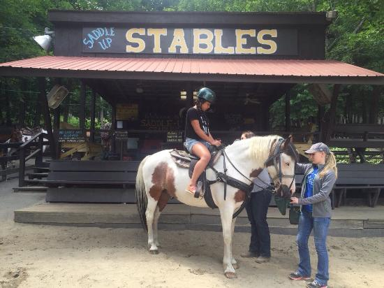 Saddle Up Stables : photo0.jpg