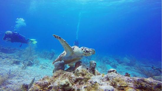 George Town, Wielki Kajman: Diving with turtles