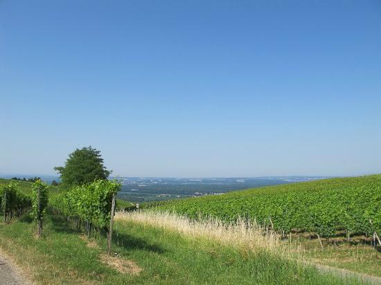Blansingen, Allemagne : Surrounding wine gardens on the hill