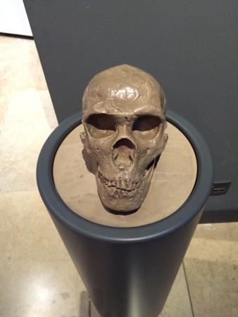 Museo Regional de Prehistoria y Arqueologia de Cantabria: fotografía de Museo...