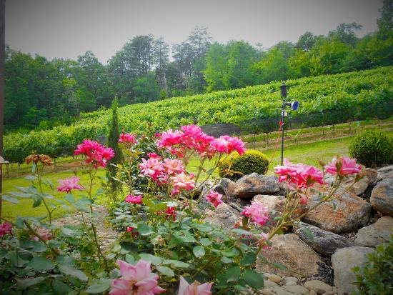 Cleveland, GA: Summertime Beauty flows through the Vineyard
