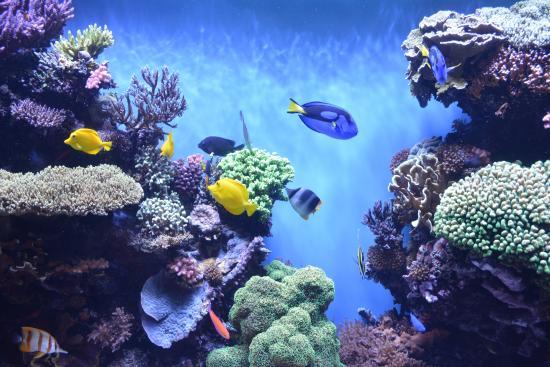 Aqu Rio Foto Di Monterey Bay Aquarium Monterey