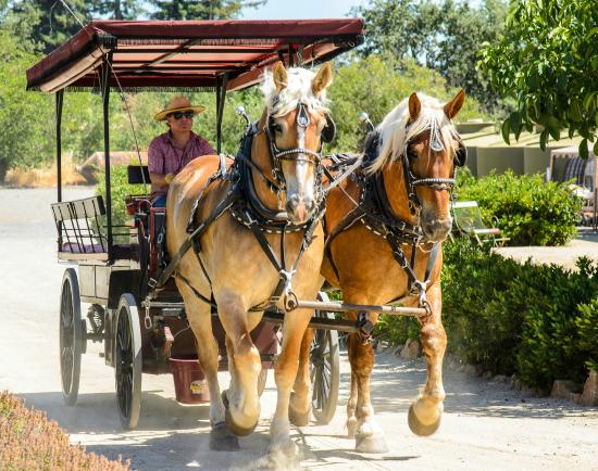 The Wine Carriage: Ready to start the day traveling through the vineyards!