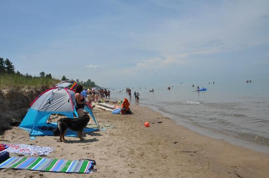 Pinery Provincial Park Beach  Dog Beach