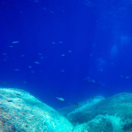 Corallo nero gorgonie rosse foto di blu dive center santa teresa gallura tripadvisor - Dive center blu ...