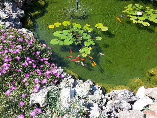 B&B Campodisole: il laghetto in giardino