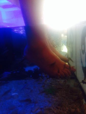 Picture of nature fish spa los cristianos for Garra rufa fish pedicure locations