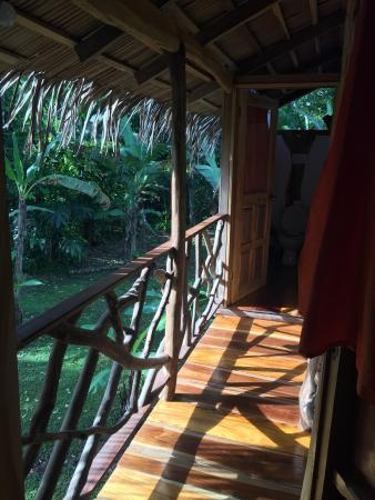 3 Bamboo: photo7.jpg