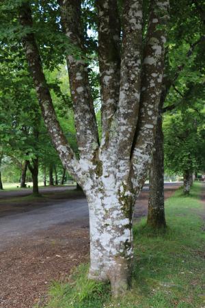 Portumna Forest Park : Forest Park.