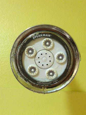 BEST WESTERN PLUS Brunswick Inn & Suites : Shower head with mold and calcium bulid-up