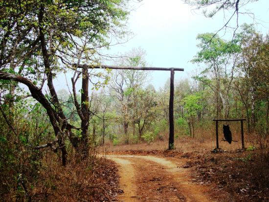 The Hermitage Guesthouse : The forest road to the Guest House...