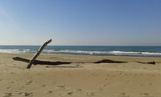 Espiguette Beach: Tout simplement une superbe plage pour les amoureux de la Nature......