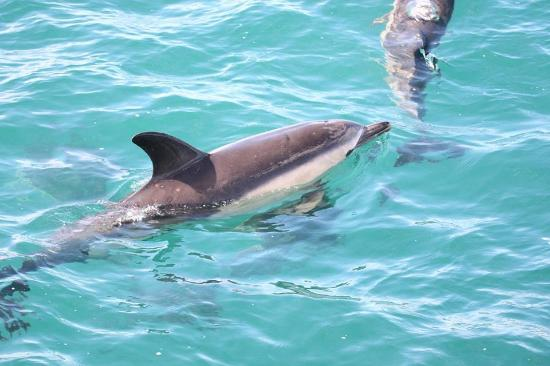 Gairloch Marine Life Centre & Cruises: Wow crystal clear water.Great marine life to spit.