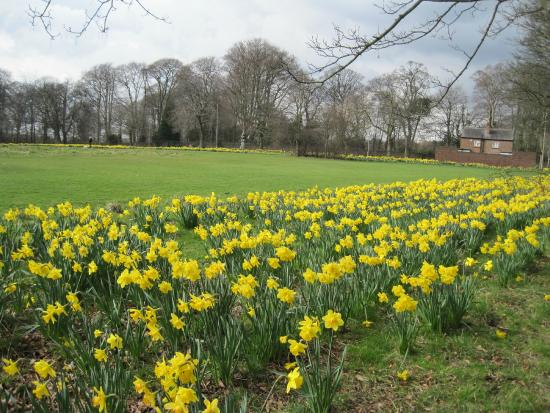 Clarkes Gardens
