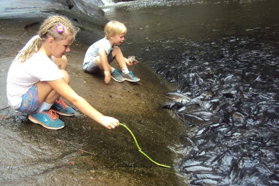 Khao Chamao Khao Wong National Park: Feeding snake beans to the carp in the river