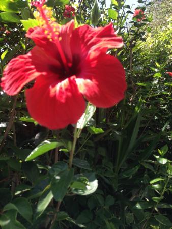 Afroditi: Ibisco simbolo di Rodi, dal giardino