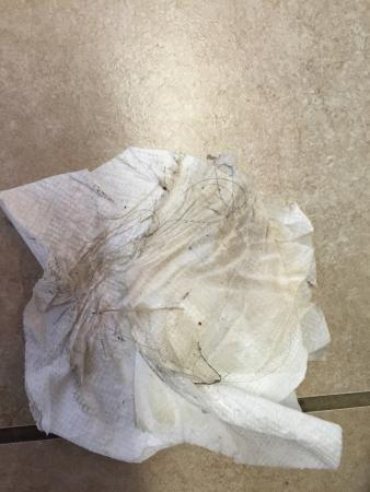"""Rockport, TX: dripped water on the floor AFTER the cleaning lady came to """"re-mop"""".   This is what paper towel"""
