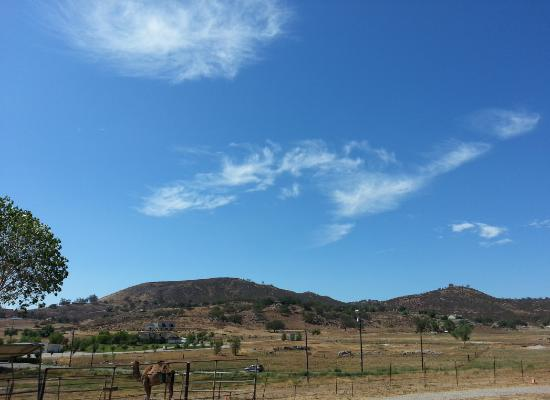 Oasis Camel Dairy : wide open spaces