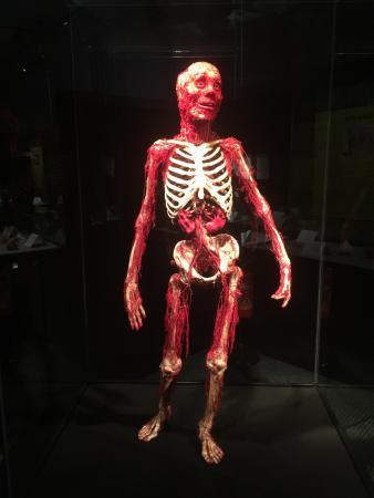 Gunther von Hagen s BodyWorlds The Anatomical Exhibition of Real Human Bodies Movie HD free download 720p