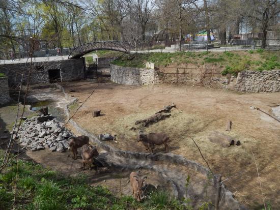 Shevchenko Park: зоопарк