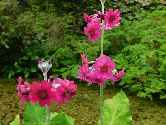 Crarae Garden Argyll: Flowers 1
