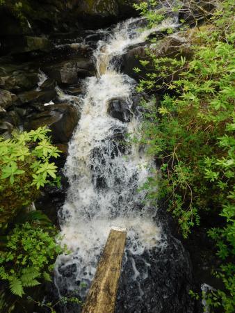 Crarae Garden Argyll: Creek from bridge.