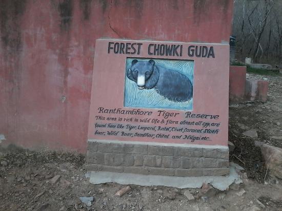 Ranthambore National Park: Guda choki