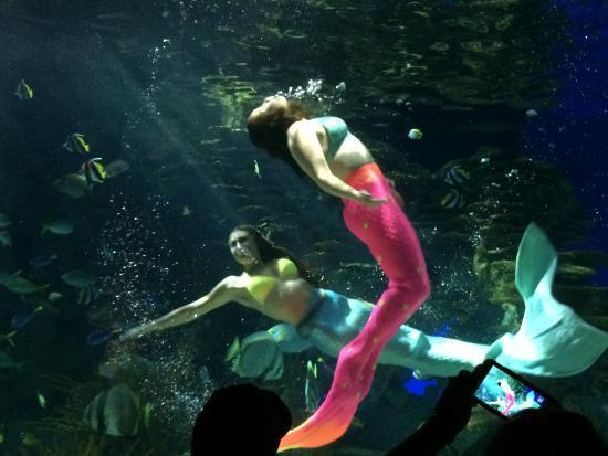 Tn Aquarium Hours