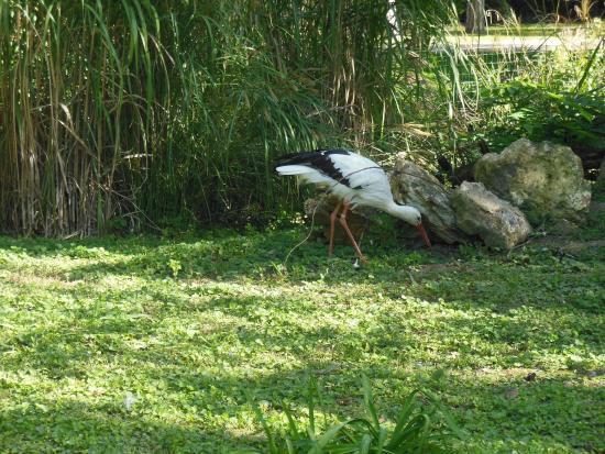 Jardin botanique de tours photo de jardin botanique de for Jardin botanique tours