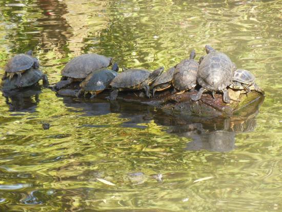 jardin botanique de tours bronzette des tortues - Jardin Botanique De Tours