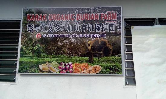 Karak Organic Durian Farm