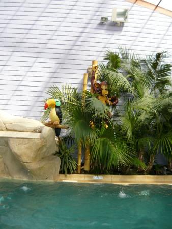 Les animaux de la piscine interieur picture of sunelia l for Piscine interieur