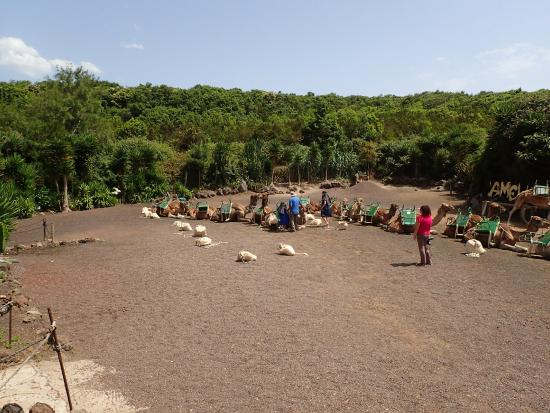 Camello Center: camellos el tanque